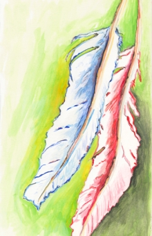 Magic Feathers 14x8 in. watercolor/pencil
