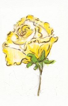 Yellow Roses 4x5 in. watercolor
